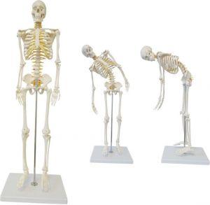 Anatomisch skeletmodel 85 cm ST-ATM 005