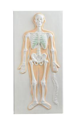 Anatomisch model hart/longen 3D wandplaat  (met stevige handgreep) ST-ATM144
