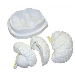 Anatomisch model brein 3-delig ST-ATM 56