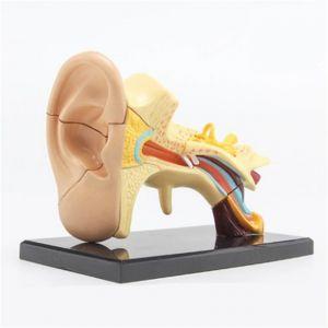 Anatomisch mini-oormodel ST-ATM 68